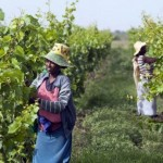 Growth sales Ethiopian wine raises cheer for economy