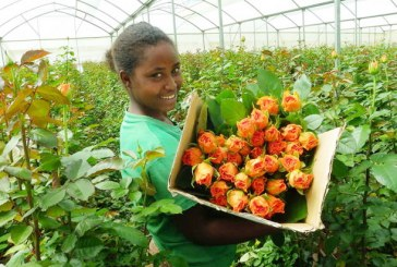 Ethiopia Earns $245 Million from Horticultural Products