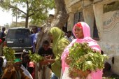 Ethiopia's Khat Struggles After Countries Ban