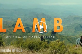 The heartwarming Ethiopian movie of a boy and his lamb – CNN INSIDE AFRICA