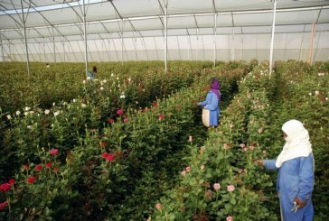 Dutch, Israeli Flower Farms Attacked by Protesters in Ethiopia