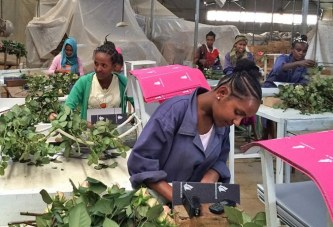Ethiopia earns $271 million from flower and horticulture export